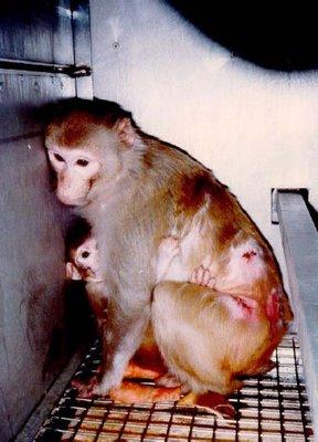 stop vivisection.jpg