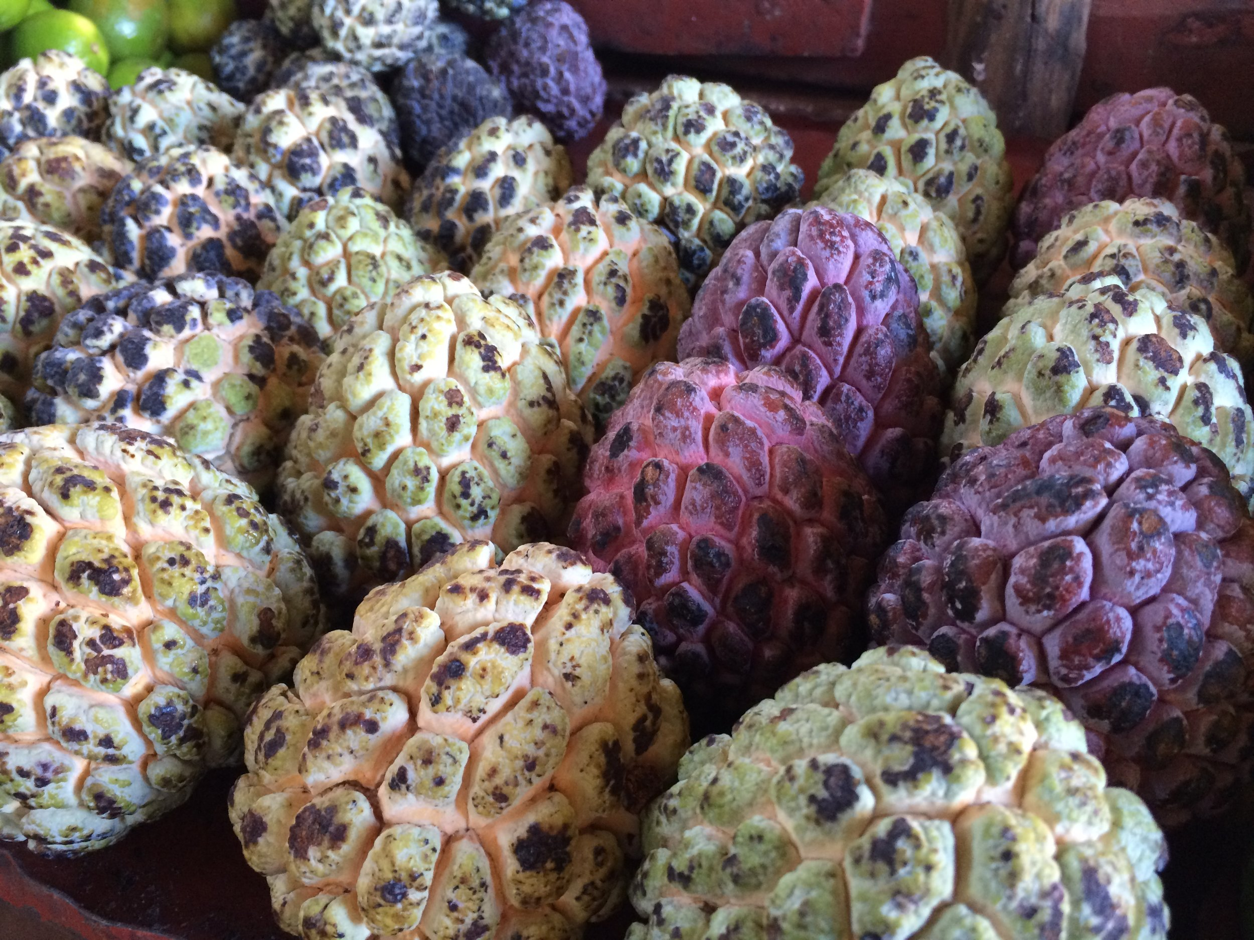 The anon, or sugar apple, is one of the exotic fruits that I've become acquainted with in Cuba.