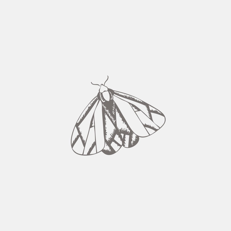 #the100dayproject moth illustration Bea & Bloom Creative Design Studio