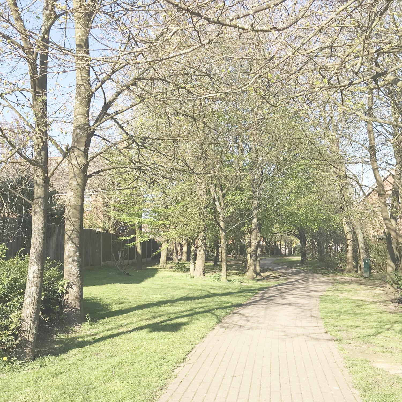 April sunshine dog walks