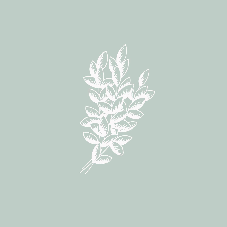 #the100dayproject leaves foliage illustration Bea & Bloom | Creative Design Studio