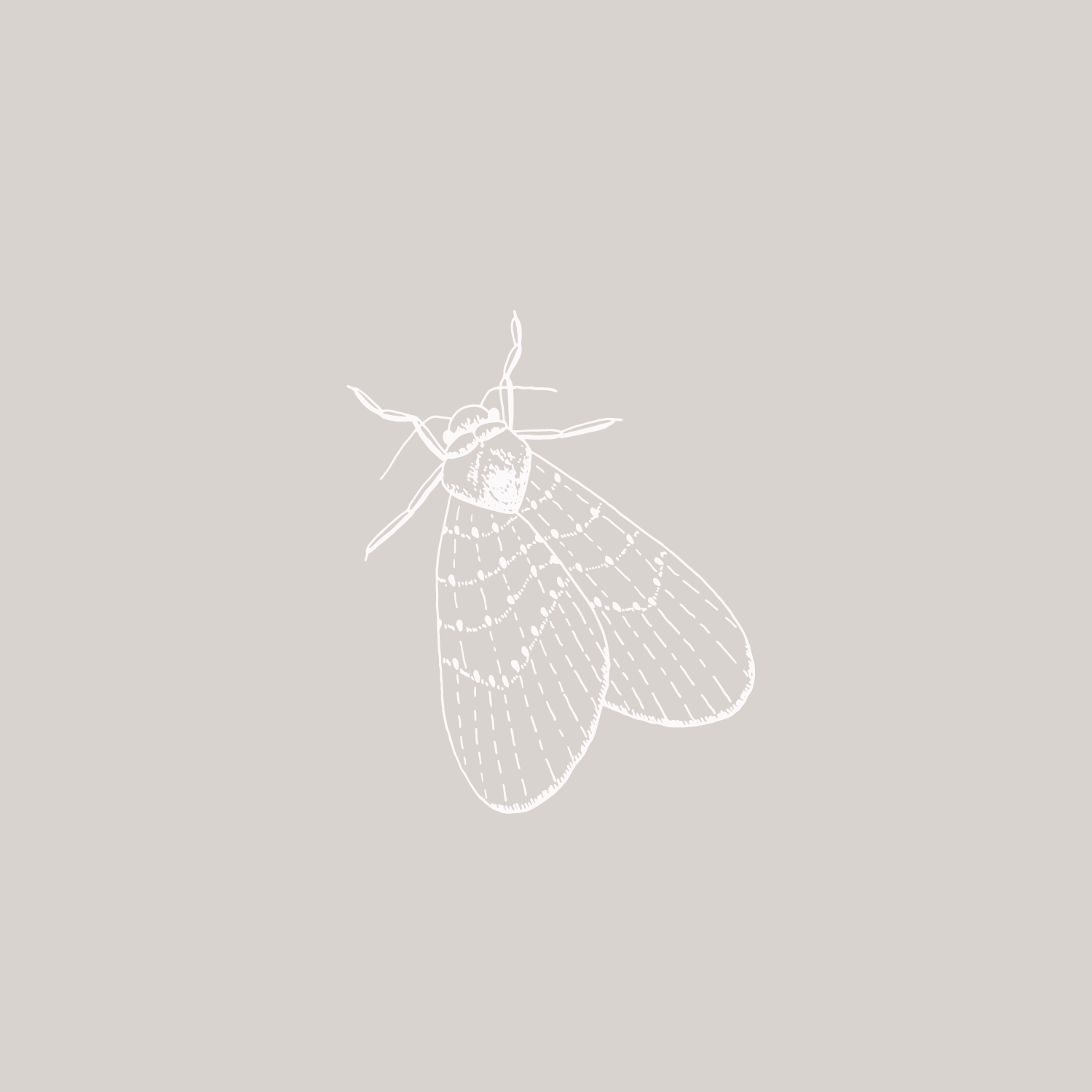 Moth illustration #the100dayproject by Bea & Bloom Creative Design Studio