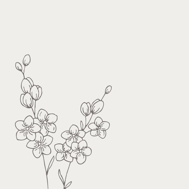 Forget-me-not illustration - The Language of Flowers - Bea & Bloom Creative Design Studio