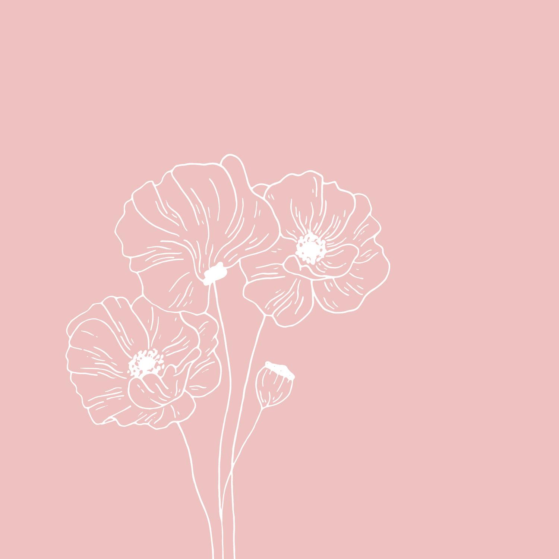 Poppy illustration - The Language of Flowers - Bea & Bloom Creative Design Studio