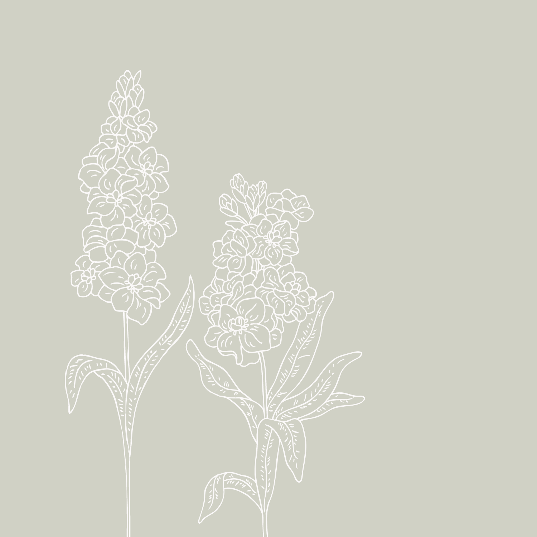 Bea & Bloom Creative Design Studio - Floral Illustration - The Language of Flowers