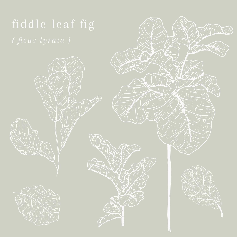 Bea & Bloom Creative Design Studio - Botanical Plant Illustrations