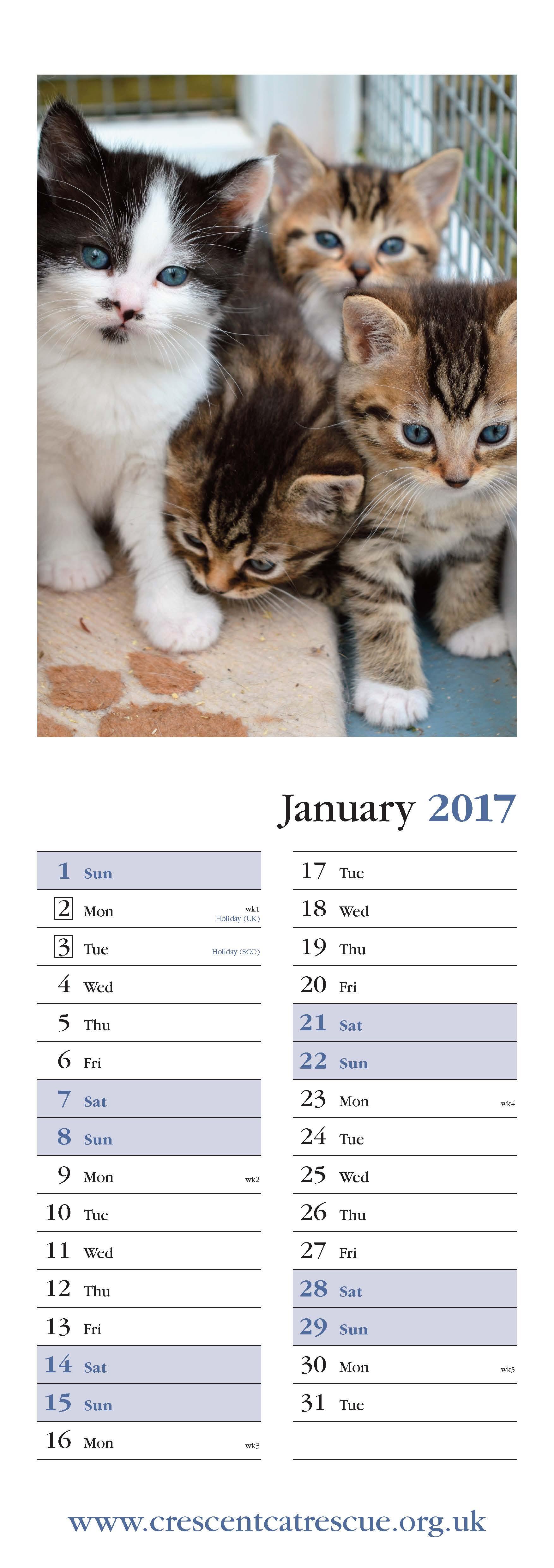 945_394 Crescent Cat Rescue W-S1 2.jpg