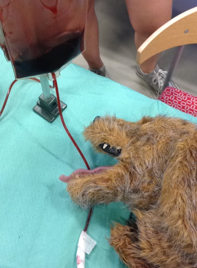 No worries, this is a fake dog, and that's fake blood. I promised this blog wouldn't be  that  gory.