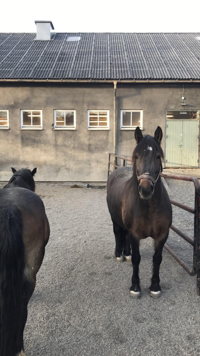 Completely unrelated picture I took of the school horses the other day. I tried to pet one of them, but as you can see from the sceptical look I was given they were not having any of it.