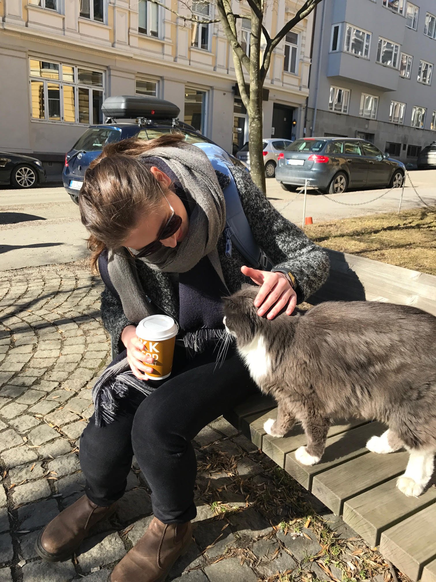 There is no better stress reliever than spending your free period in the sun, petting one of the local cats. We found this little one sunbathing on the bench when we were headed back to school after lunch today, and just had to sneak in a little cuddle.