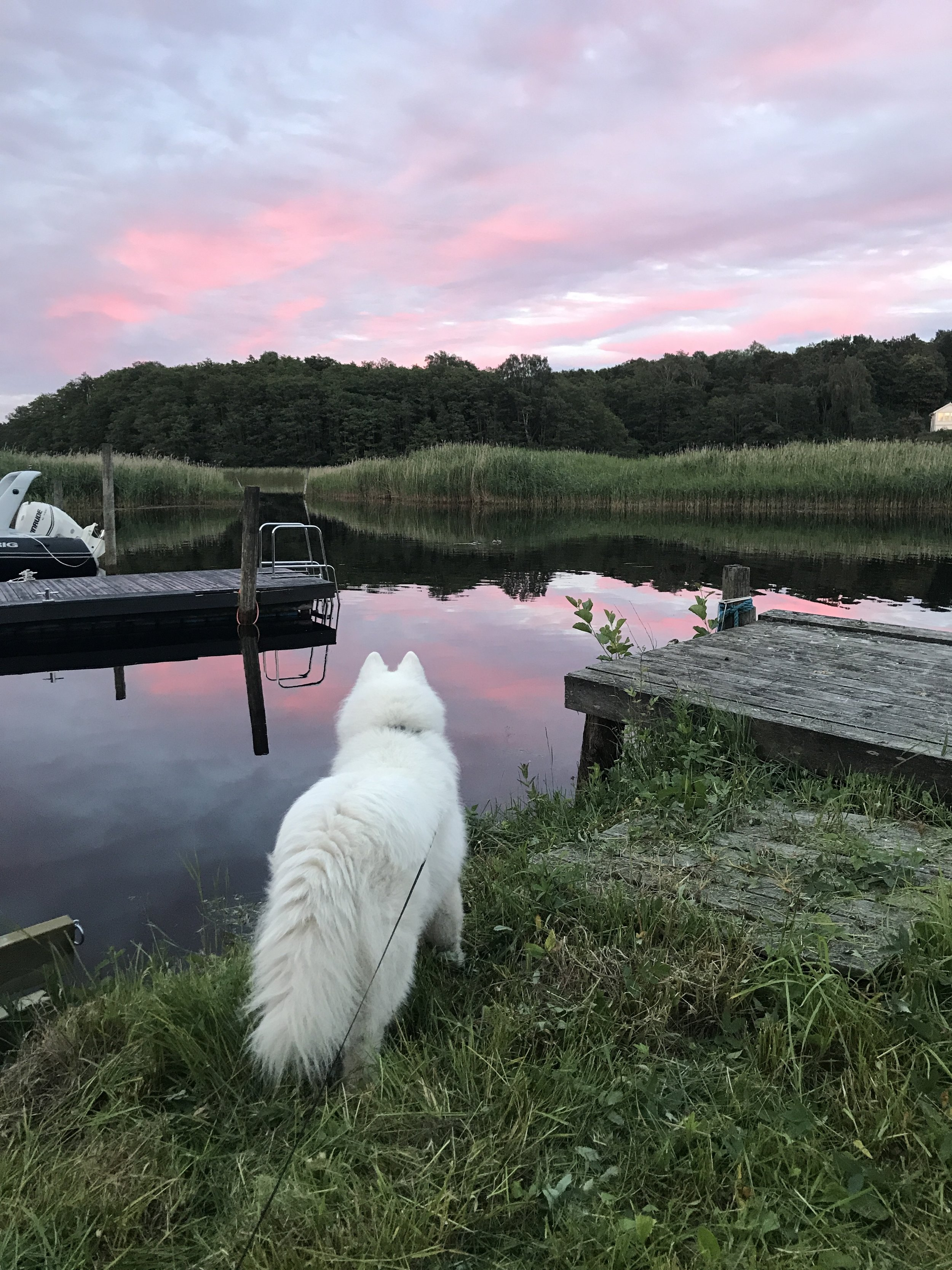Here's a bonus pic of my dog for making it through the entire blog post. Look at this gorgeous girl! She's probably looking for beavers or ducks in this image.