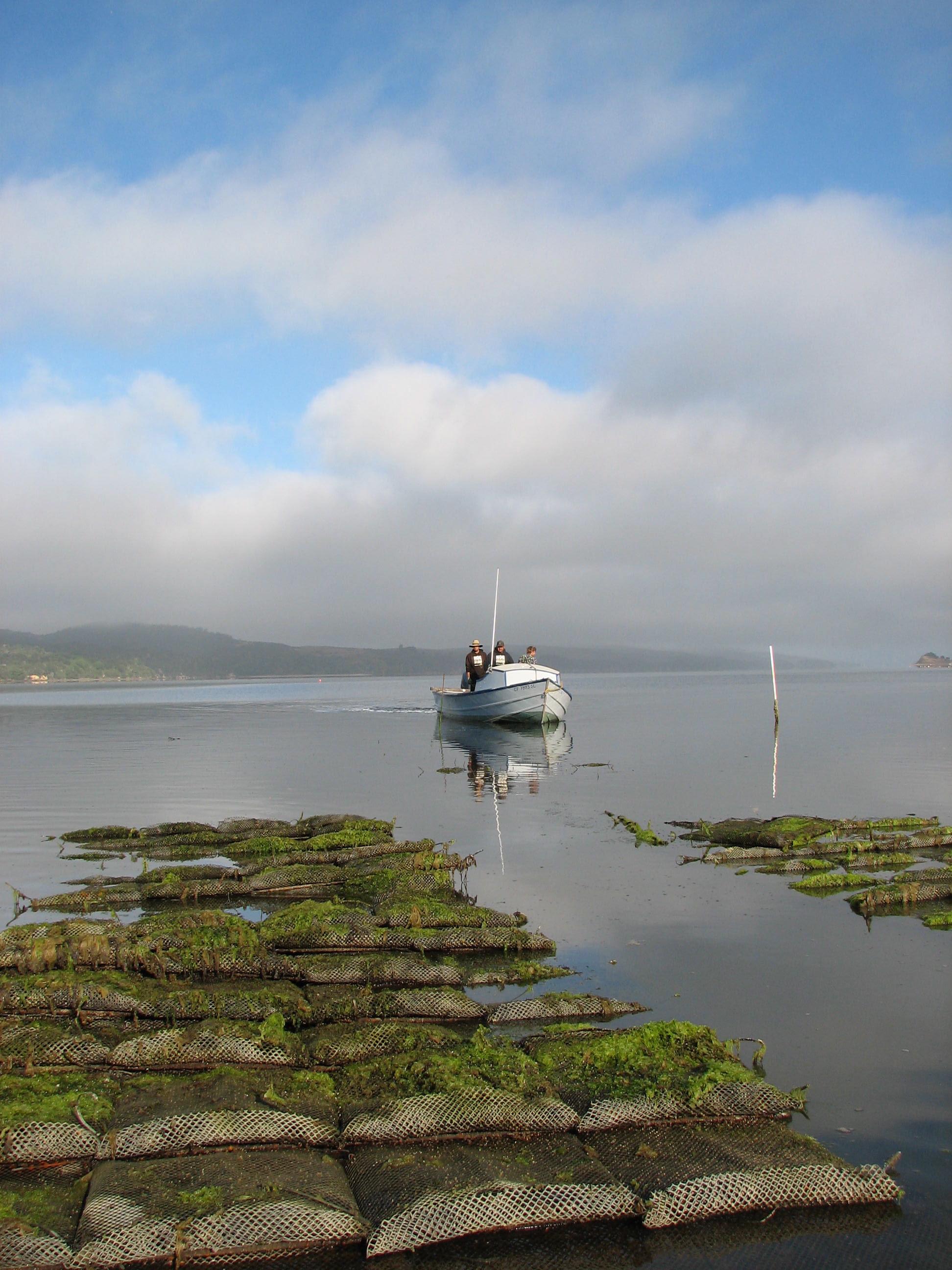 Photo Credit Brenna Schlagenhauf. Courtesy Hog Island Oyster Co. Racks and Hoyster.JPG