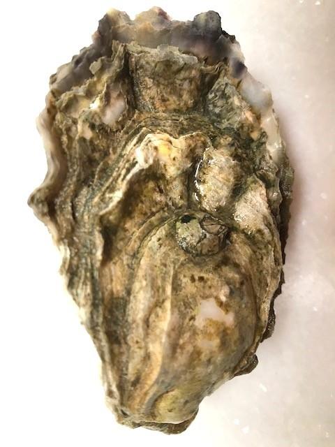 sunhollow shell.jpg