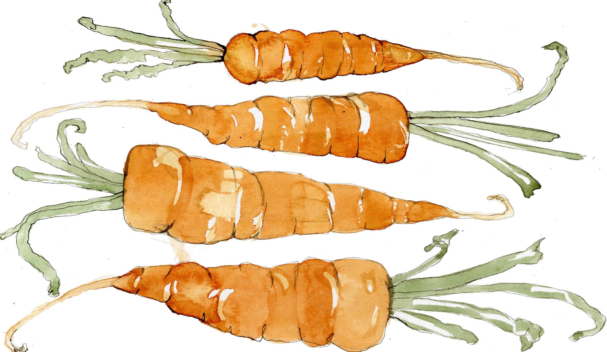 carrots copy.jpg