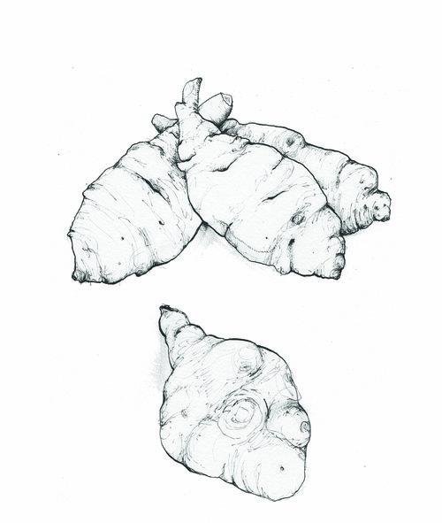 jerusalem+artichoke.jpg