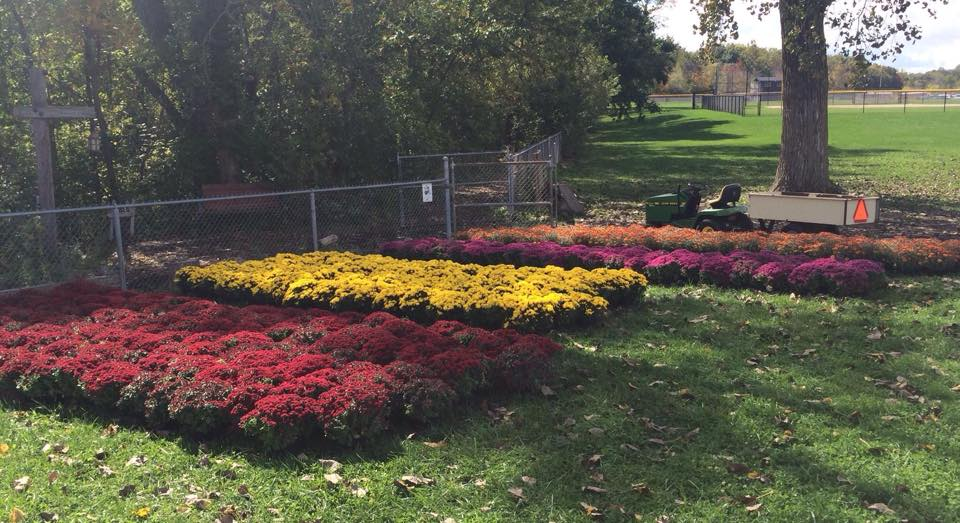 Fall Mum Sale