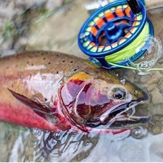 fly_fishing_golden_colorado