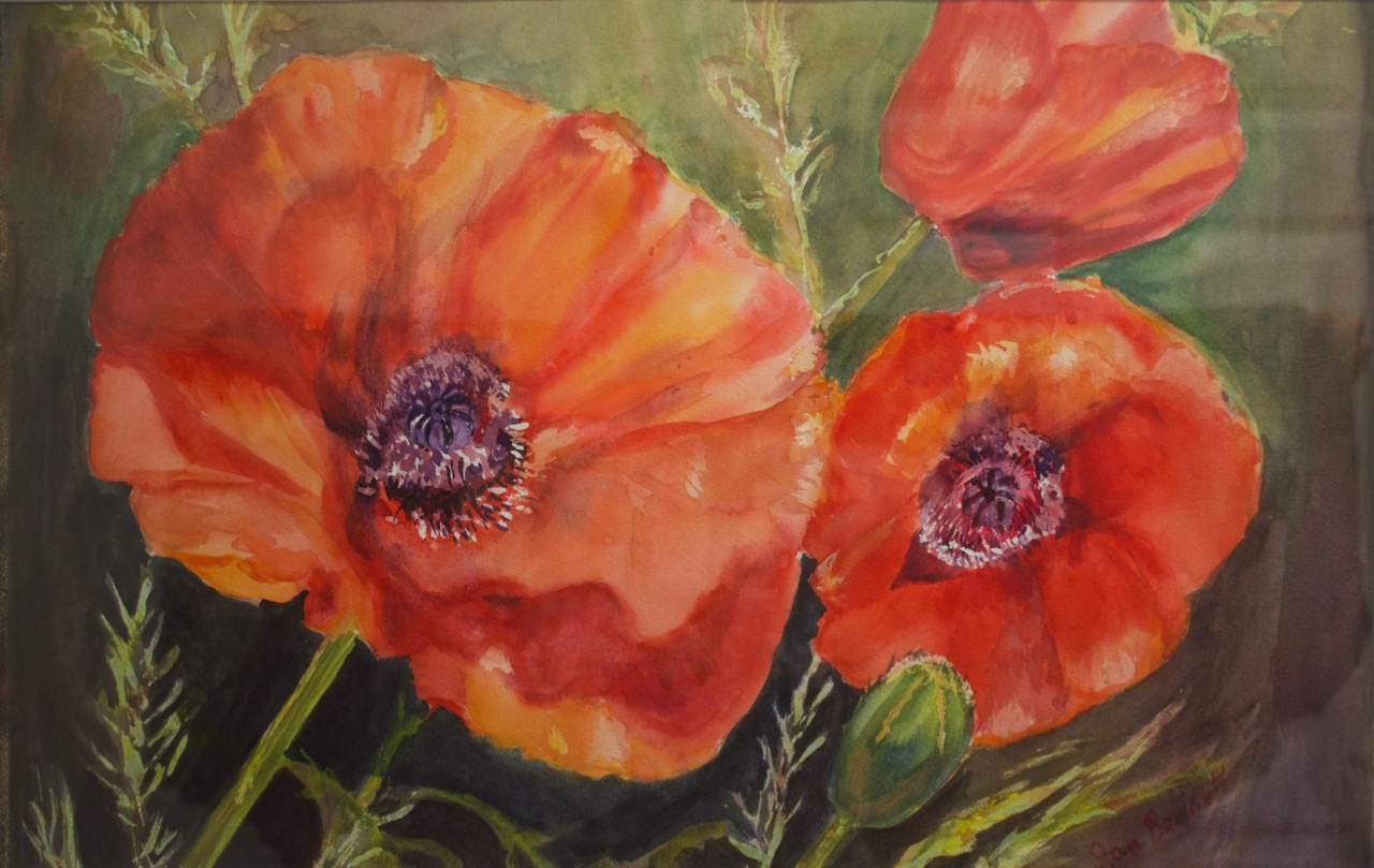 Flaming Poppies - 28