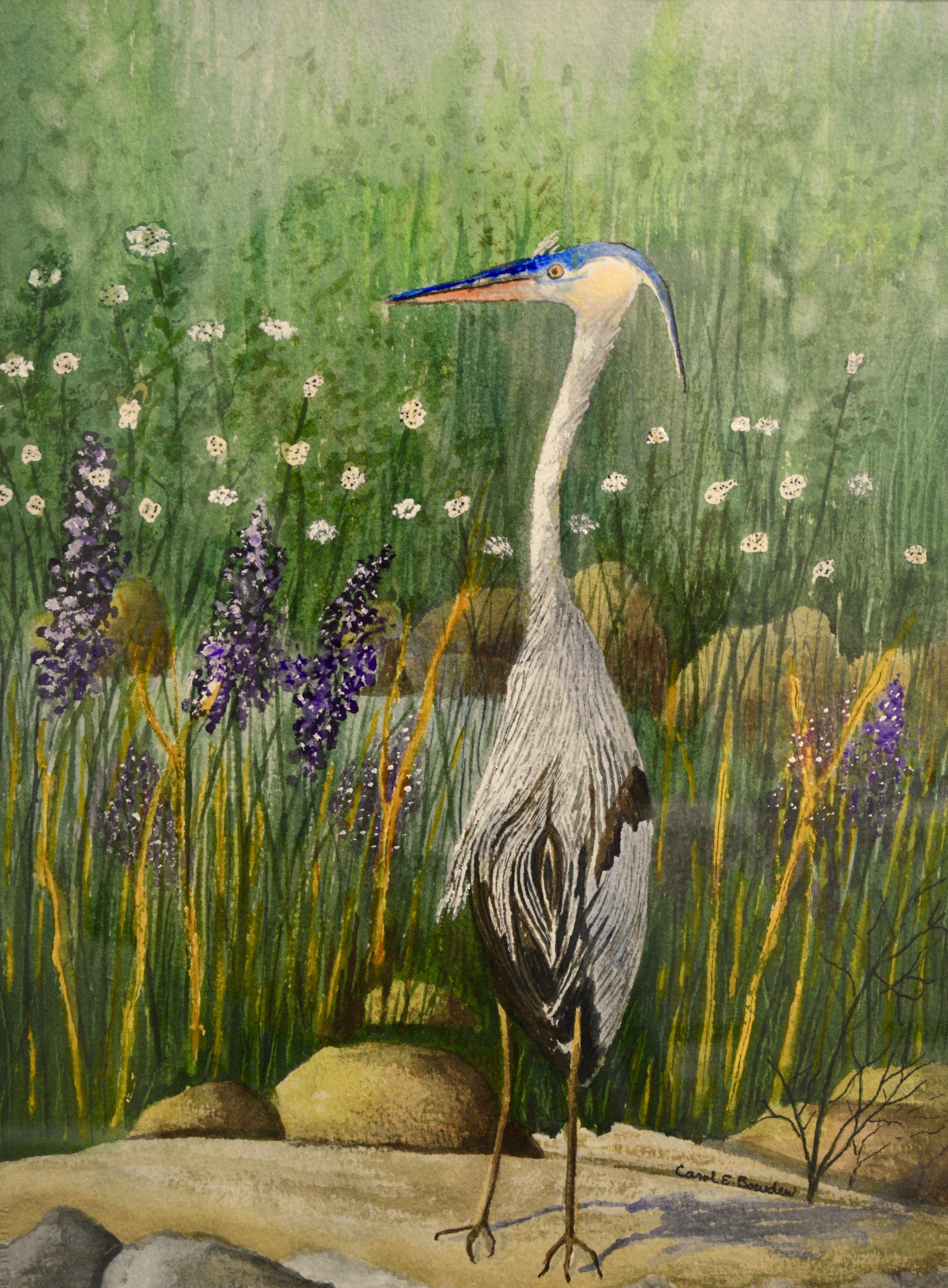 Blue Heron - 18