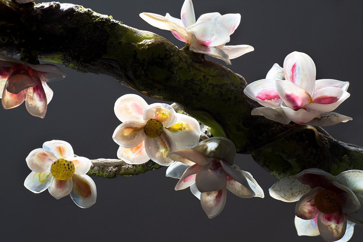 Magnolia, detail, 2019