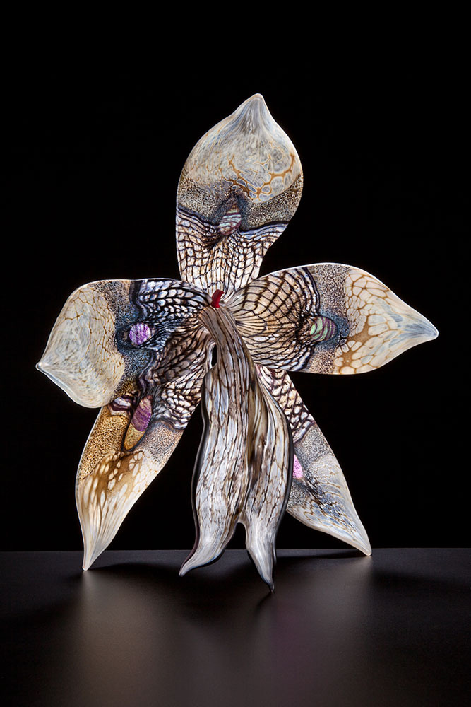 Moth Orchid - Gigantica II Blown and Sculpted Glass 16 x 15 x 7