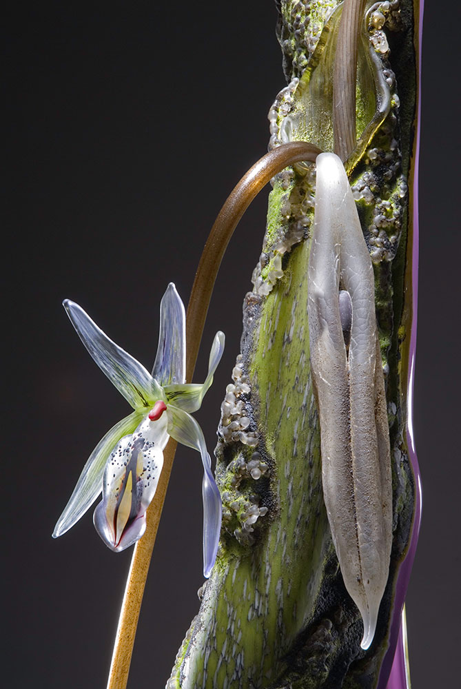 Host XIX - Purple Spider Orchid Blown and Sculpted Glass 42 x 8 x 9