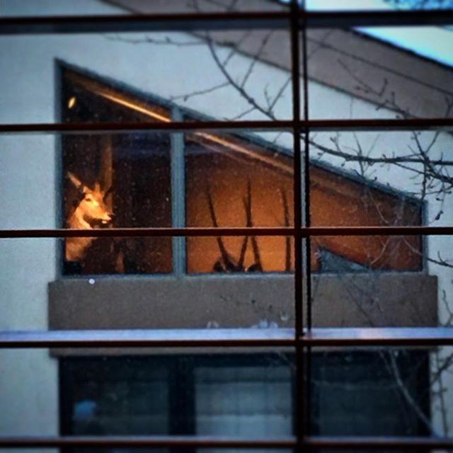 Strange Neighbor