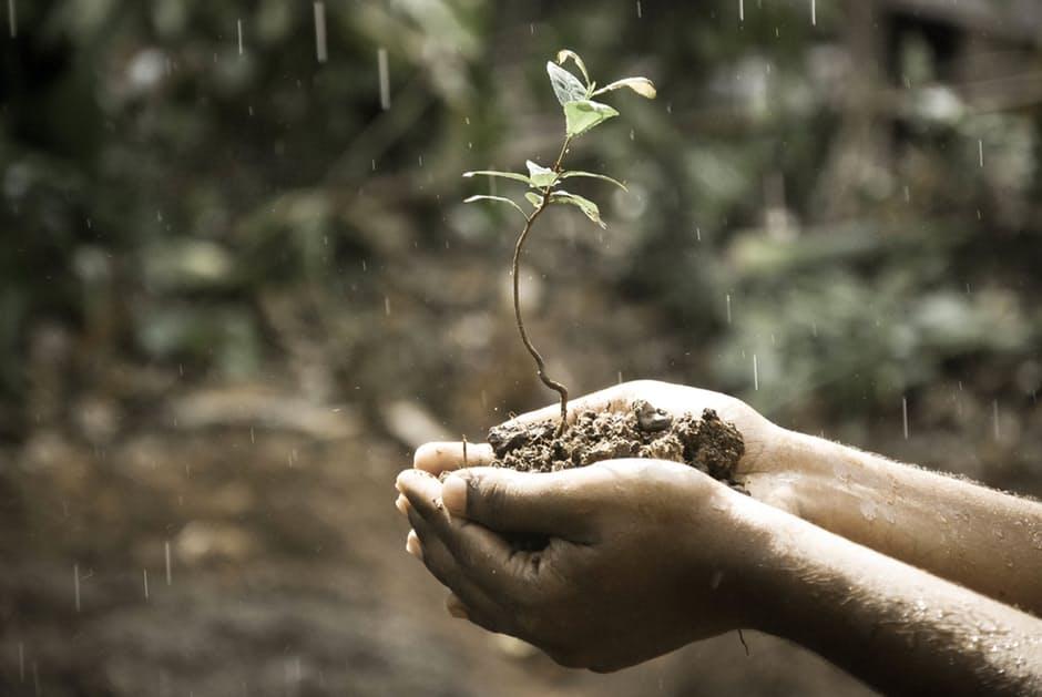 handplant.jpeg