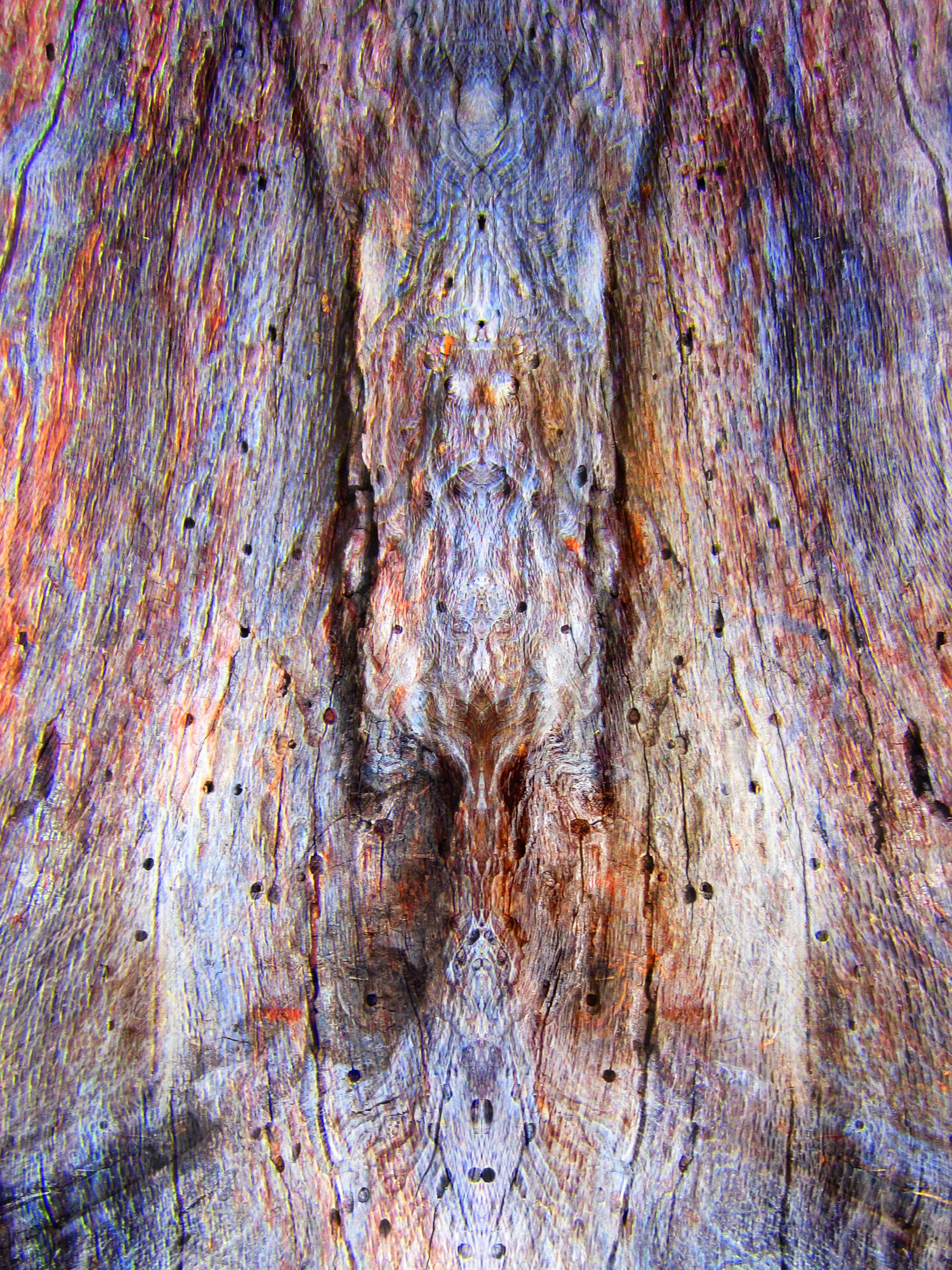 bark_painting_1b_color.jpg