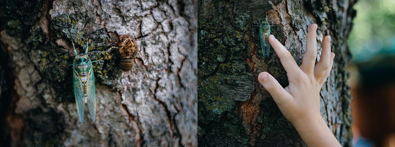 august 6. cicada observation