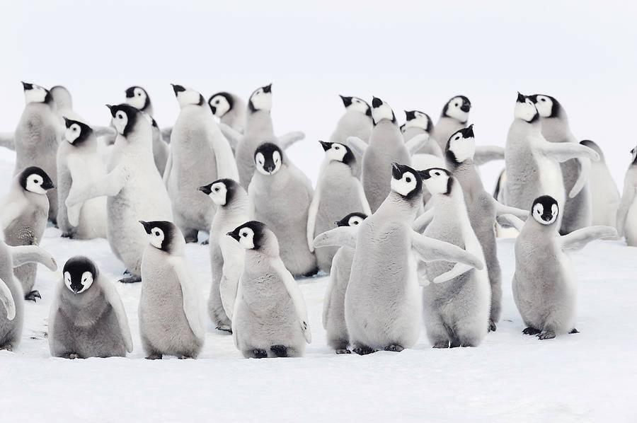 penguins_museum.jpg