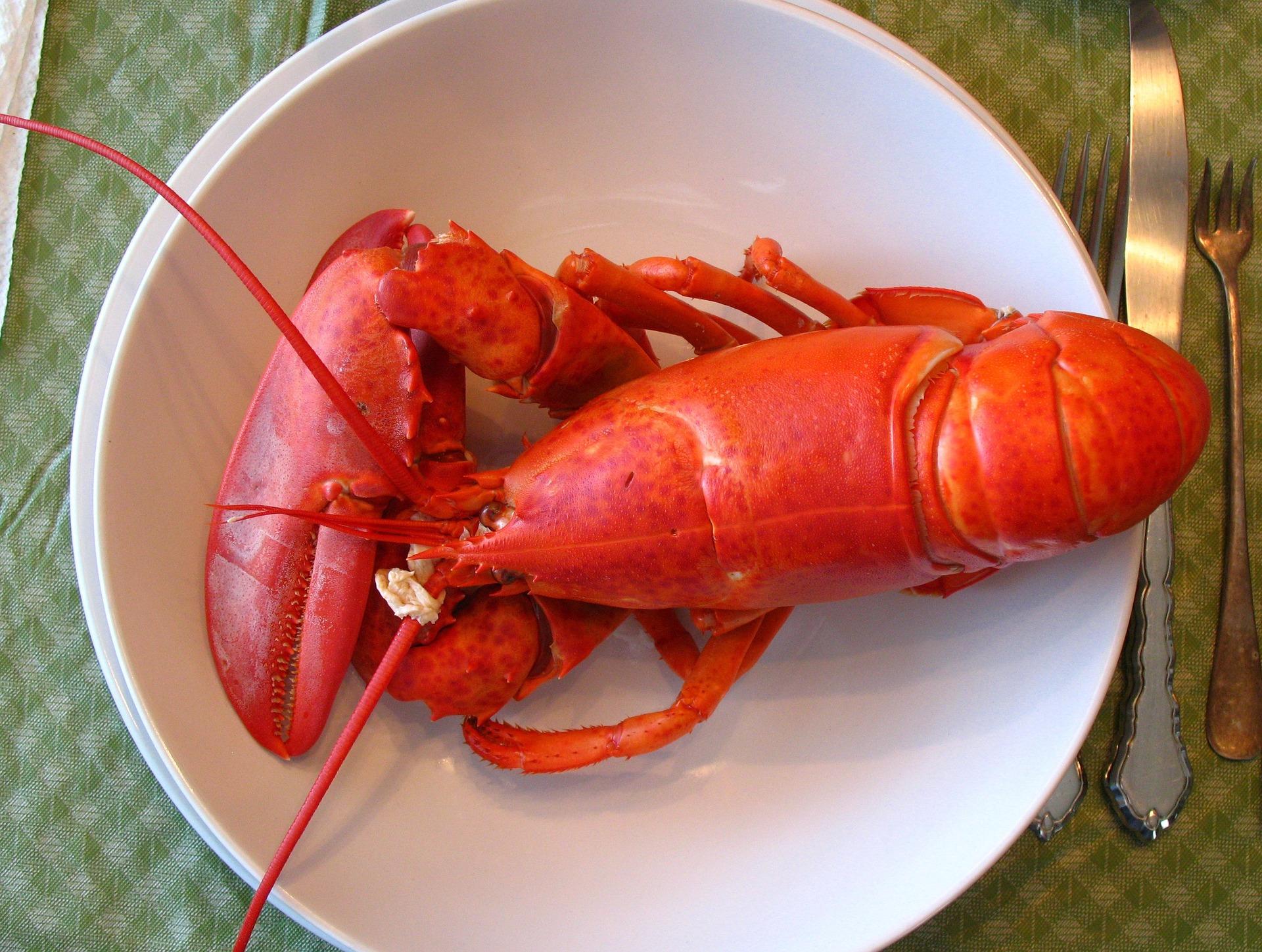 lobster-1089140_1920.jpg