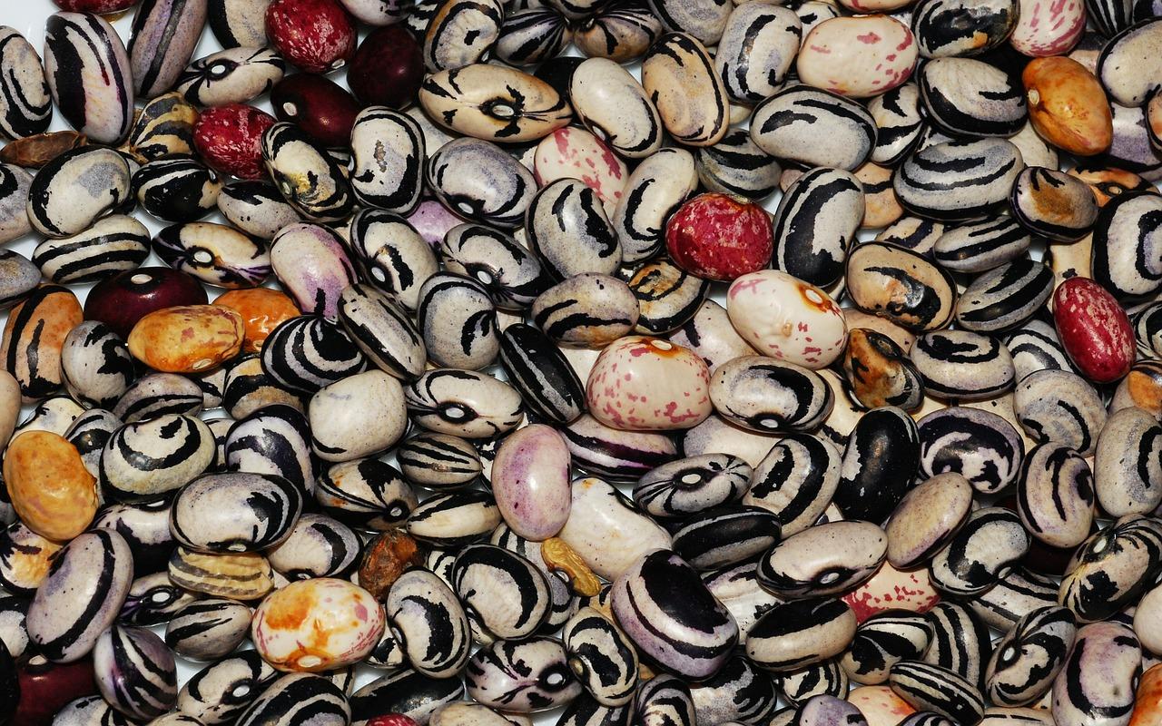 beans-503893_1280.jpg