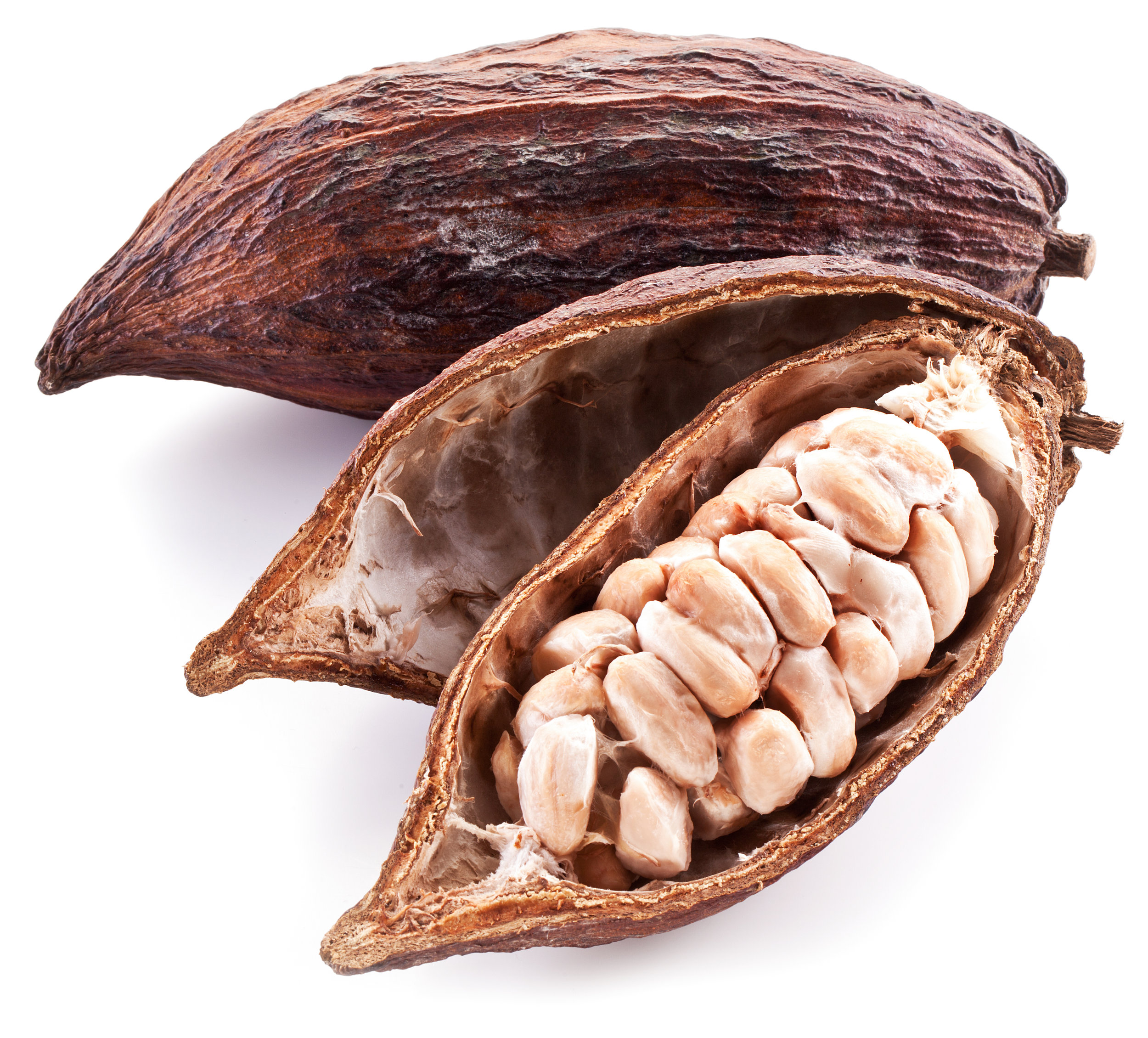 Raw Cocoa Beans in the Pod