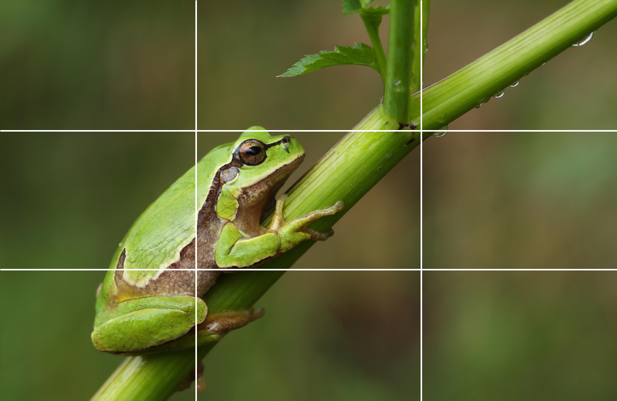 Rule of Thirds Pic.png