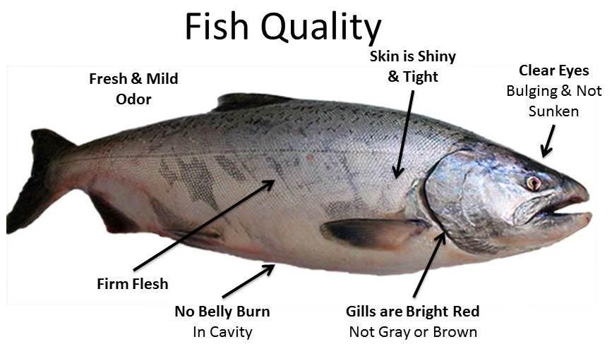 About Fish & Shellfish - Wild & Farmed Harvesting, Procuring, Storing