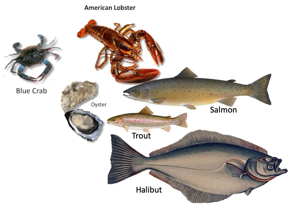 Fish & Shellfish Identification -