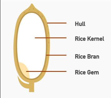 Rice Diagram.png