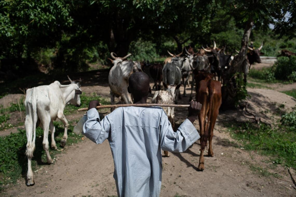 """Back home, I liked going to school,"" says Bouba, a survivor of a militant strike on his home village, while herding cows in Baigaï on 25 May 2019. ""I was good at maths, and I even liked doing homework."" In his spare time, Bouba attends the UNICEF-sponsored 'radio school', which takes place under the shade of large tree in the government school courtyard. ""Now, when I see other children returning from school during the day, I want to be among them,"" he adds."