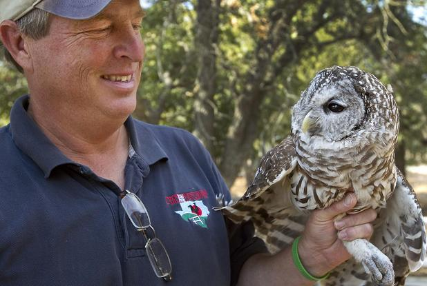 Hooter, the Barred Owl -
