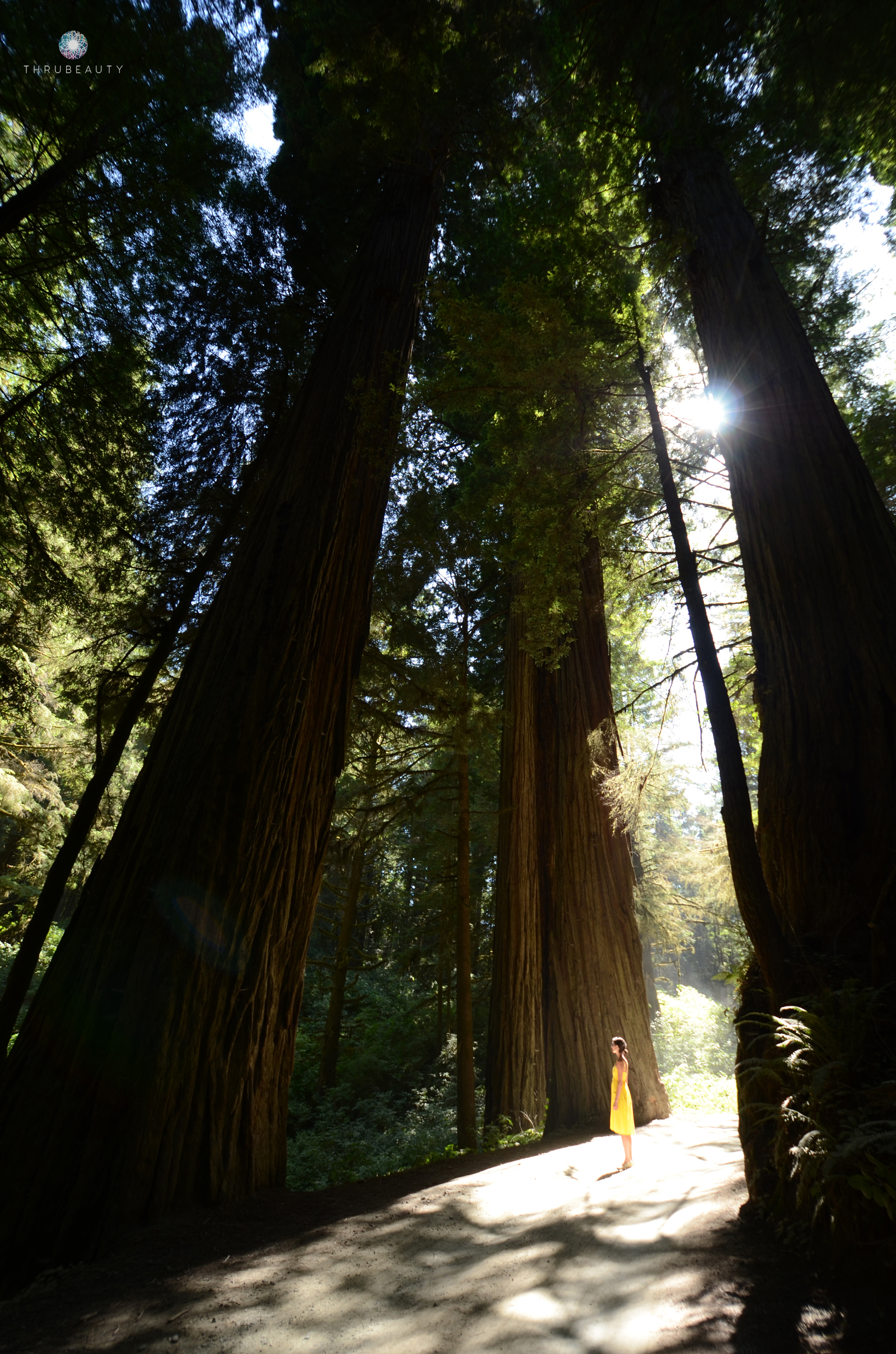 Standing in awe of the Redwoods