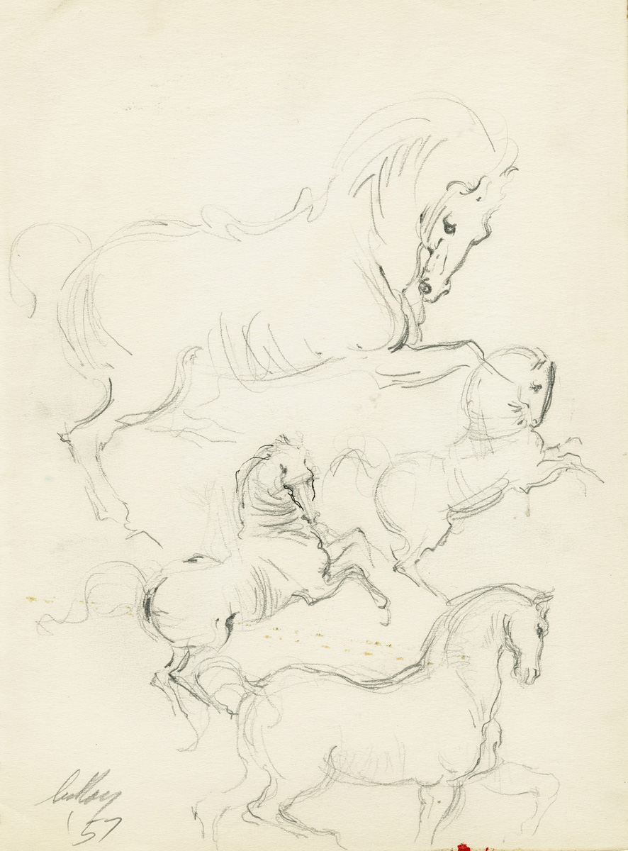 Studies of a Stallion, pen on paper, 11 x 8 in., 1957