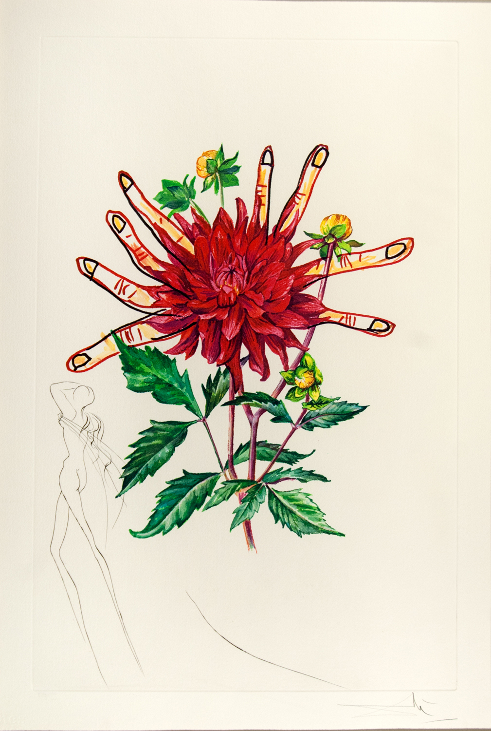 Floral  (Surrealistic Flowers 1972): Dahlia rapax (Dahlia & Fingers), heliogravure with etching, 23 x 16.5, signed EA, 1972, ML 538