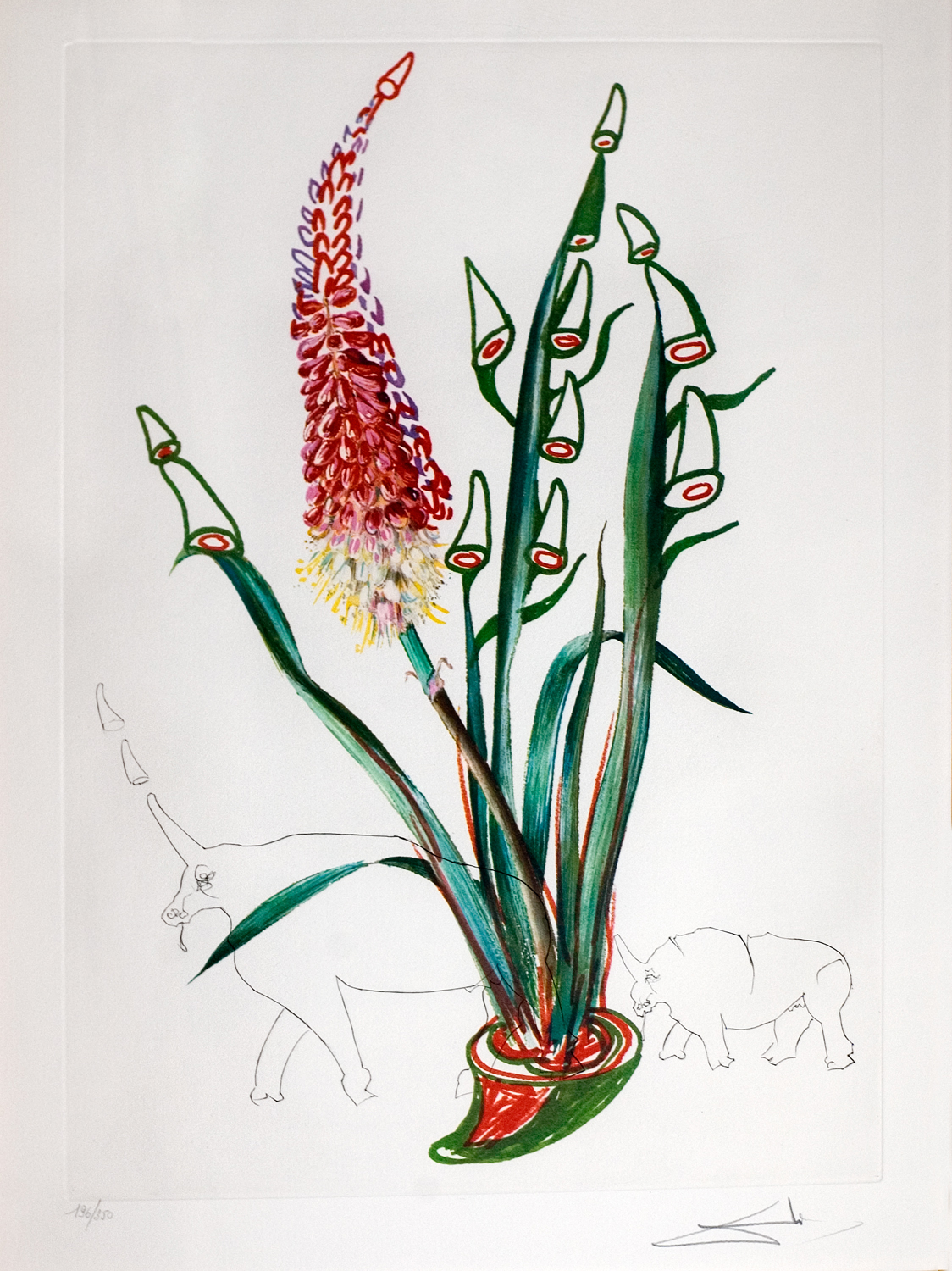 Florals (Surrealistic Flowers 1972): Kniphofia aphrodisiaca (Stock Rhinos), heliogravure with etching, 23 x 16.5, signed 210/350, 1972, ML 537