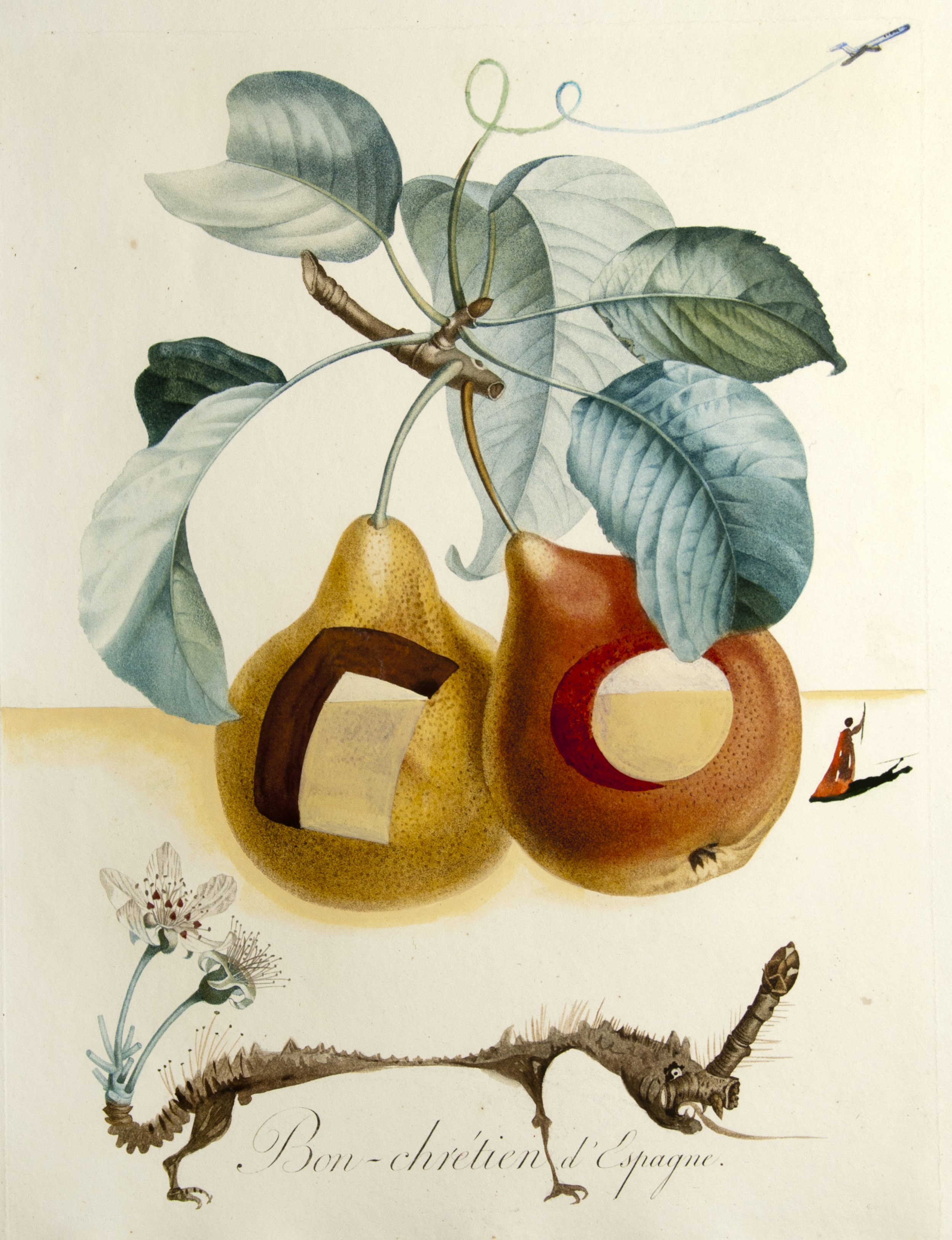 Fruits troués (Pierced Fruit), pencil, watercolour, gouache and 19th century stipple engraving, 19 x 13,  unsigned ORG, 1969