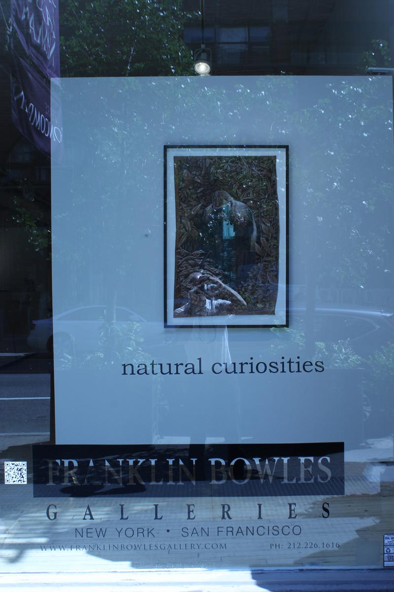Natural Curiosities 01.jpg