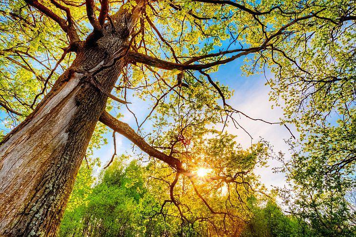 bigstock-Spring-Sun-Shining-Through-Can-82639772.jpg