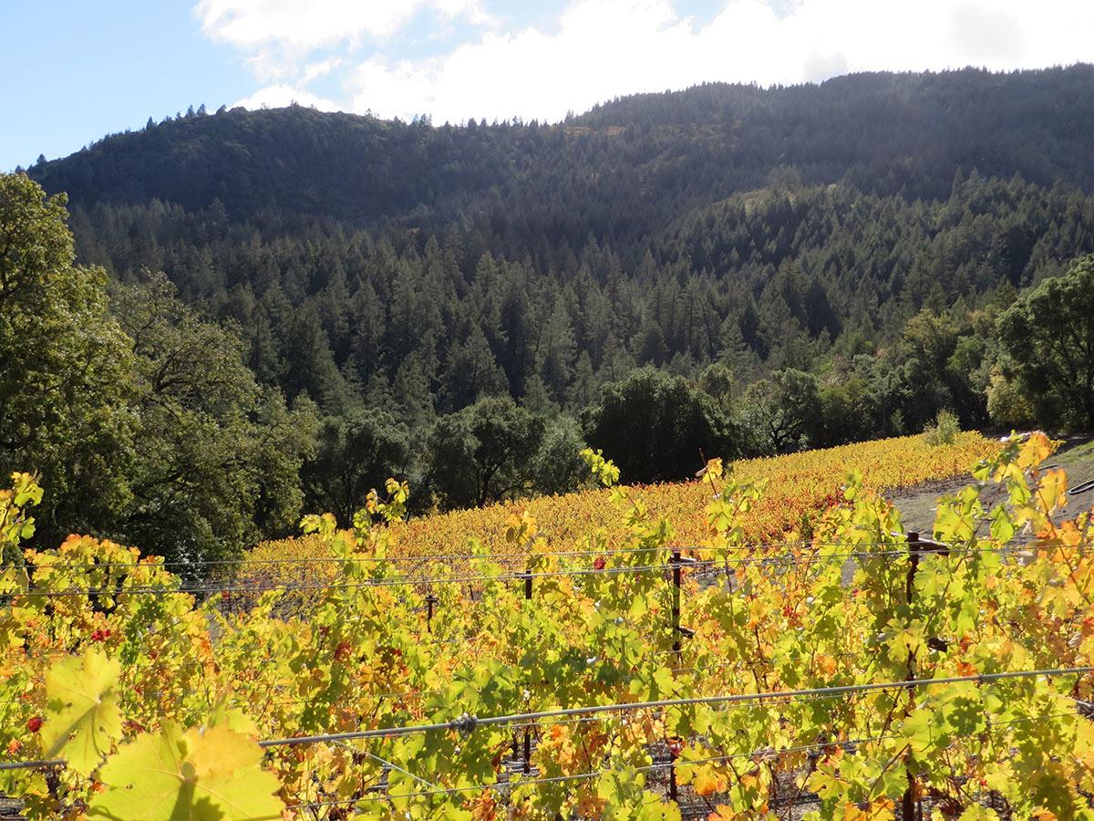 Thomas-Hsi Vineyards