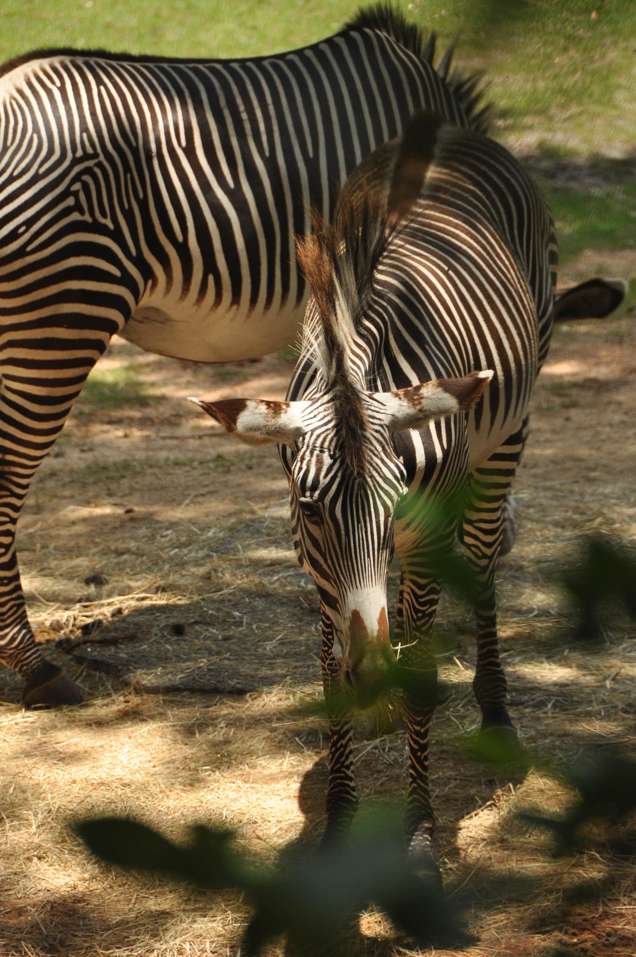 Wild Africa Trek-11.jpg
