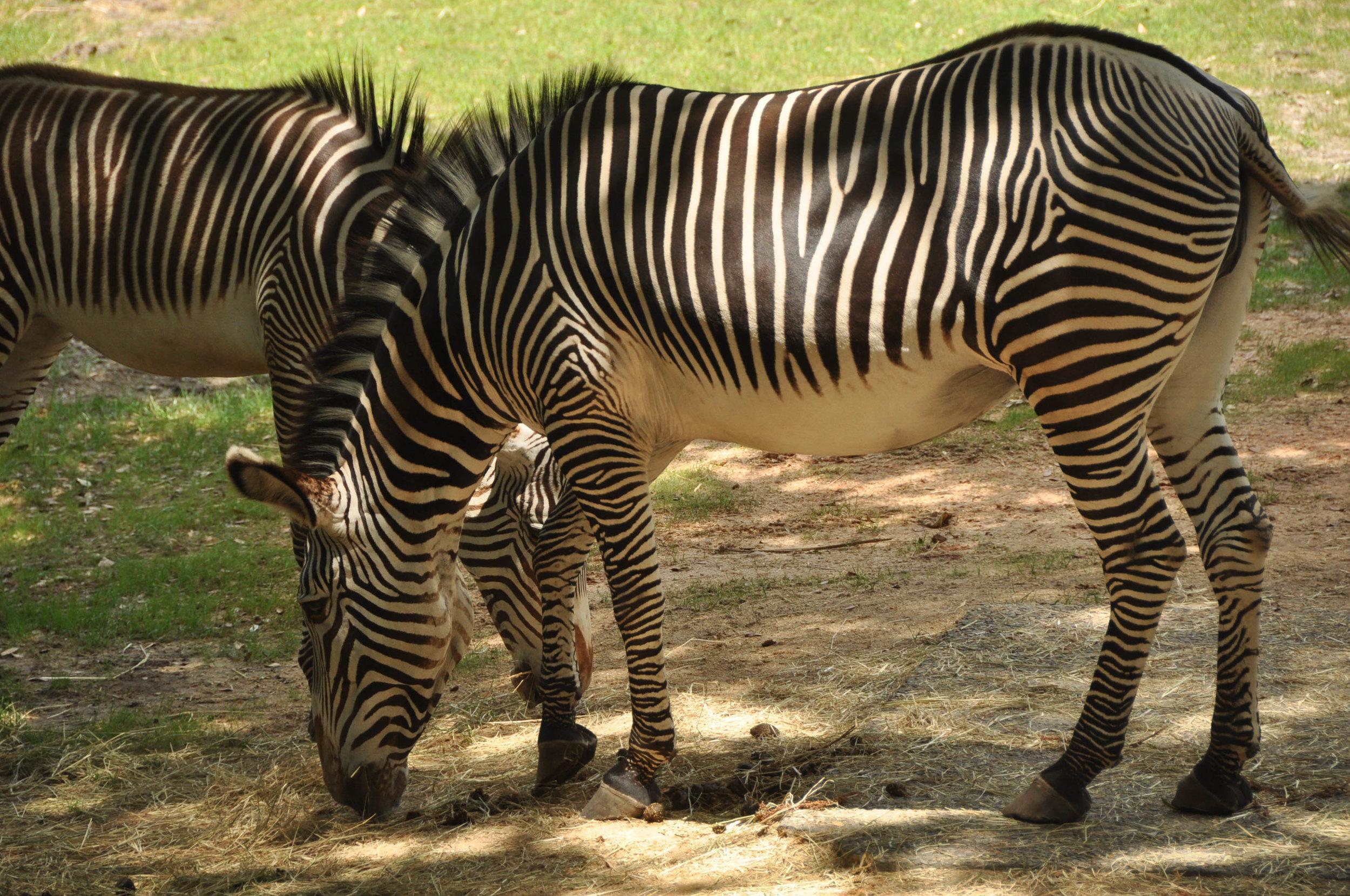 Wild Africa Trek-16.jpg